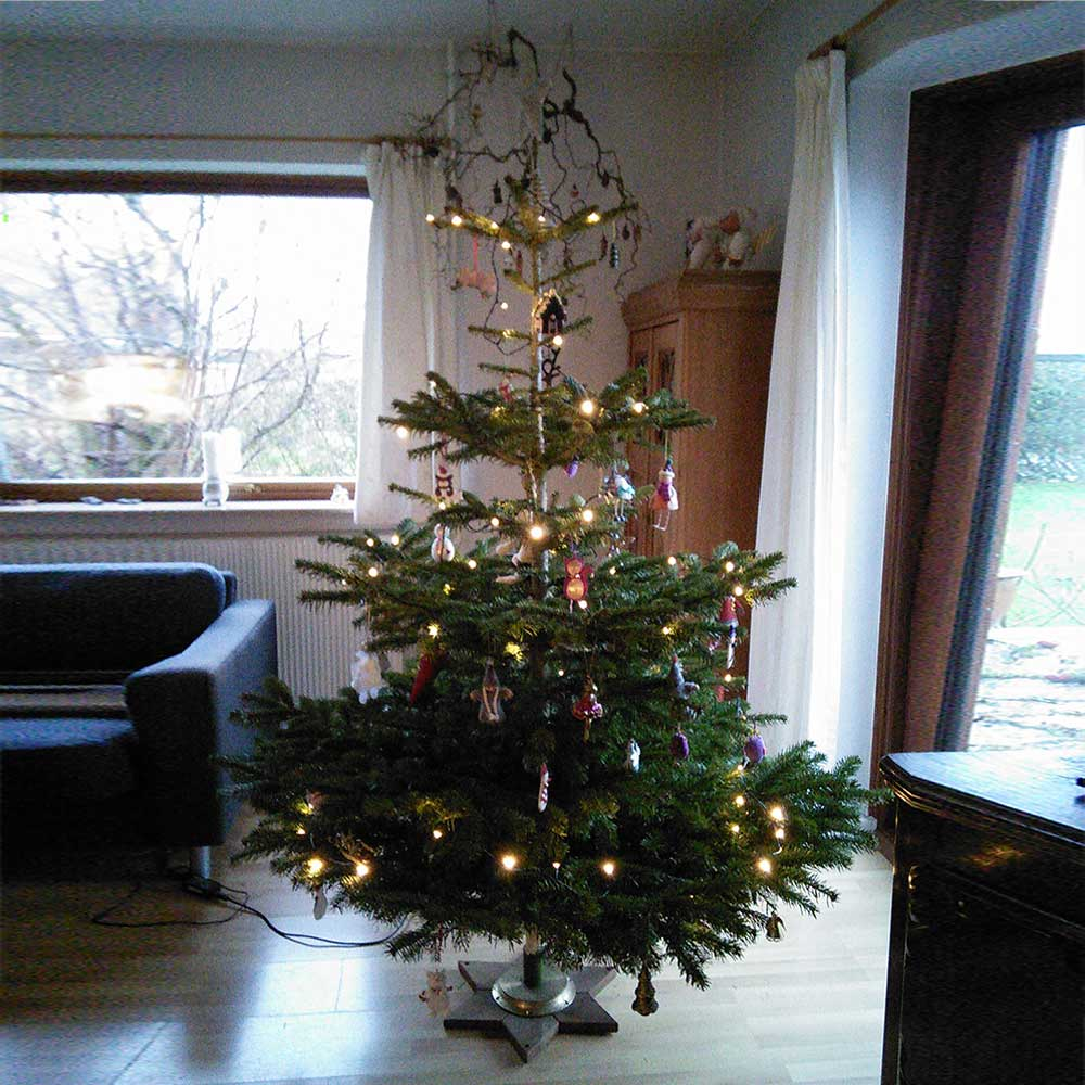 udbringning af juletræer